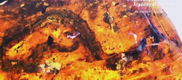 100 million year old baby snake found - Image creit - Lida Xing   China  via Live science   YouTube