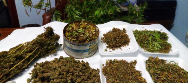 Clan di Vibo Valencia: trovate 26.000 piante di marijuana - civetta.tv
