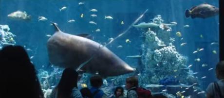 Aquaman movie trailer drops at San Diego Comic Con 2018- Image credit - DC Entertainment | YouTube