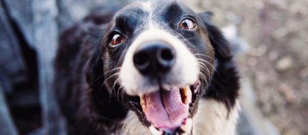 A study has proven that dogs rush to our aid when we are upset. [Image Pexels]