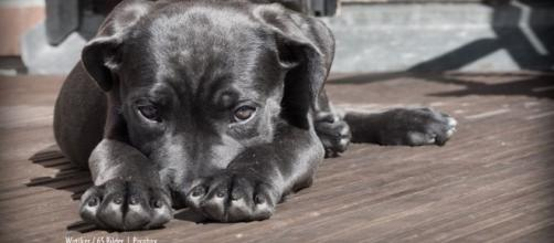 Pets lost and found for Attica wildfire victims in Greece - image credit - Winsker / 65 Bilder   Pixabay
