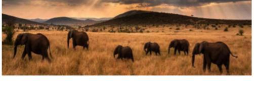Imagem de elefantes no Parque Serengeti, na África.