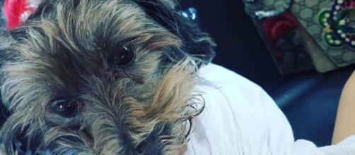Il nuovo amore di Romina Power, il suo cagnolino Daisy.