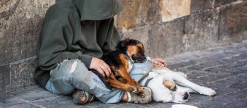 Sopprimono cane di senzatetto a sua insaputa: legale impugna causa ... - amoreaquattrozampe.it