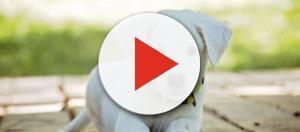 Vanderpump Dog Foundation to get donations from Atkin's god shampoo - Image credit - 3194556 / 30 Bilder / Pixabay