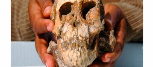 Los huesos de la niña 'Selam' sugieren nuevos hábitos en el Australopithecus