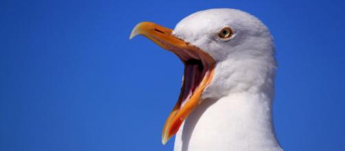 Seagulls in Devon, Dorset and Somerset are getting drunk. [Image Pexels]