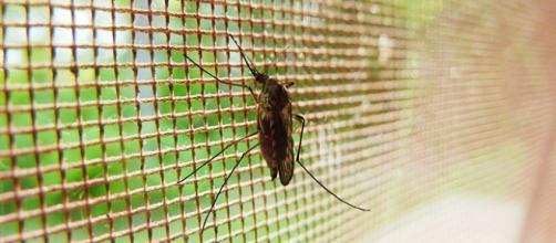 VENEZUELA / Según el Malaria World Report de la OMS aumentan los casos de paludismo