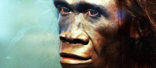 Estudio reveló que una de las causas de la extinción del Homo erectus fue la pereza