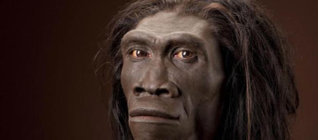 La pereza contribuyó a la extinción del Homo erectus