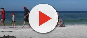 Despite red tide, visitors enjoying Anna Maria Island. [Courtesy – Bradenton Herald, YouTube]
