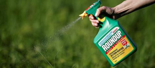 Glifosato cancerogeno? Il pesticida trovato in diverse marche di prosecco e pasta