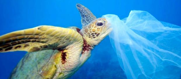 New Zealand Bans Single-Use Plastic Bag. Joyous News! [Image courtesy – The Golden One, YouTube video]