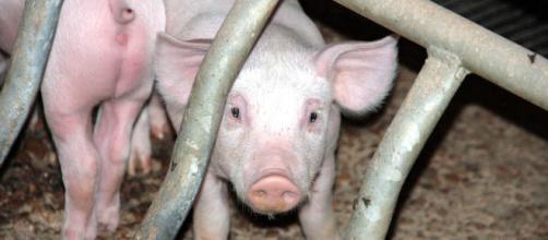 se han despertado temores en los medios del país de que los animales pronto superarán a la población humana y acapararán los recursos locales.