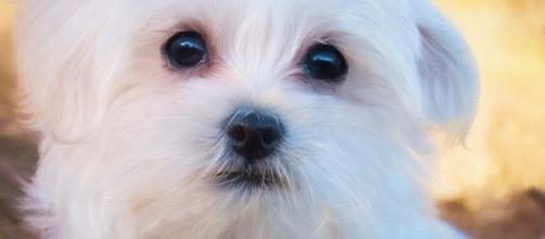 USA: a 8 anni porta fuori il cane da sola, ma una vicina fa intervenire polizia e servizi sociali