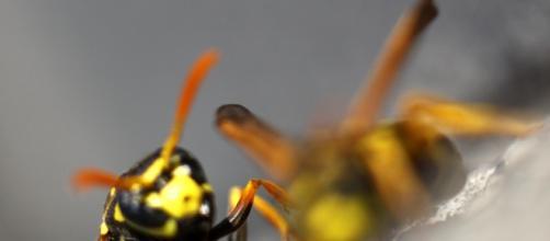 Trapani, agricoltore punto da sciame di vespe.