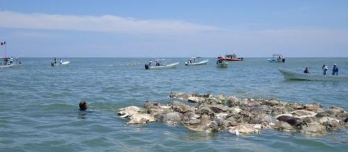 Aparecieron 300 tortugas muertas en costas mexicanas - fmlaser1035.com