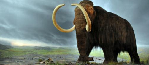 Rússia pretende trazer os mamutes lanosos de volta ao mundo