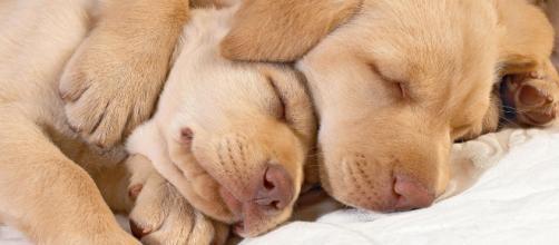 Em geral, sonhar com cachorros significa coisas boas