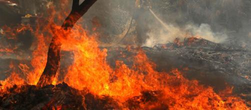 Incendios - La provincia andaluza se convierte en pasto de las llamas durante esta ola de calor