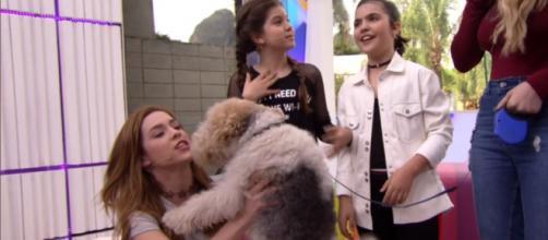 Internautas criticam suposto uso de anestesia em cão na Rede Globo