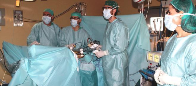 Pulmones artificiales creados en laboratorio son trasplantados en cerdos exitosamente