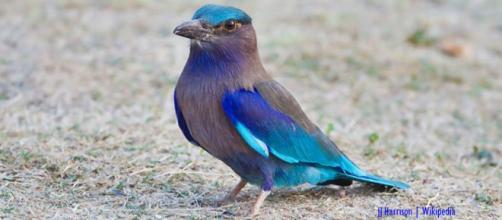 Top seven colourful bird photos found on Instagram - Image credit - JJ Harrison   Wikipedia