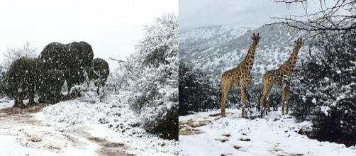 Animais acostumados ao calor se depararam com neve na África do Sul (Crédito: Instagram/Kitty Viljoen)