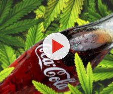 Coca Cola Cannabis Marijuana cannabidiolo Cmd