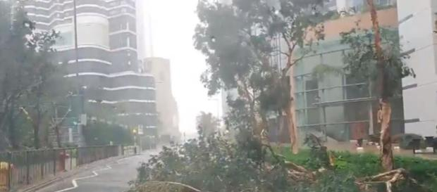 Hng Kong Super Typhoon destroys trees - Image credit - Brown Eye | YouTube