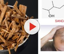 Recettori olfattivi presenti nello scalpo, se esposti al profumo del legno di sandalo, stimolano i bulbi piliferi.