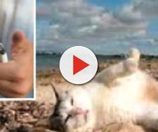Napoli, tenta di uccidere gatto con un petardo nell'ano - Internapoli