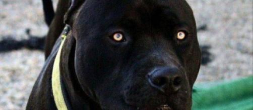 Os cães mais perigosos do mundo