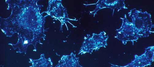Argentina, terapia fotodinamica: pianta 'cegadera' potenzialmente utile contro il cancro