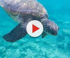 Spagna, una donna scopre di avere una tartaruga morta nella vagina