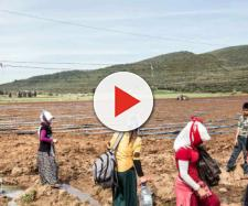 Braccianti agricoli, badanti e muratori rischiano di diminuire e scomparire con lo stop agli immigrati.