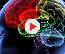 Studio italiano sul lievito di birra svela possibili cause di malattie neurodegenerative