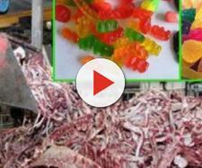 Balas de gelatina e outros alimentos produzidos de forma controversa