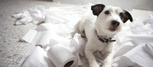 O cachorro indica solidão quando faz bagunça