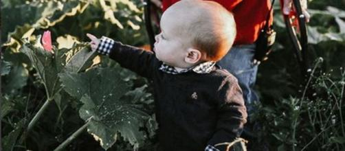 Little People, Big World: baby J out helping Grandapa matt Roloff in the pumpkin patch - Image credit- Matt Roloff   Instagram