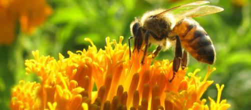 Pesticidas químicos impiden a las abejas reproducirse - Ecoosfera - ecoosfera.com