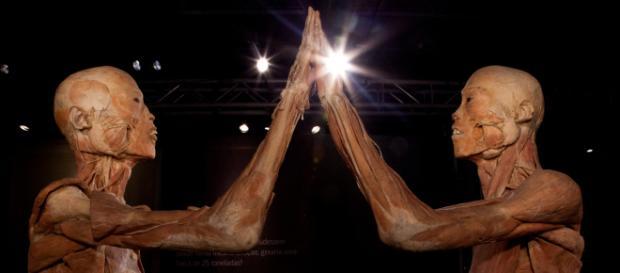 Aliar os tipos de Anatomia favorece um bom diagnóstico