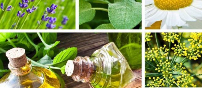 Tratamiento herbario para la ansiedad: qué sí consumir, qué no y sus contraindicaciones