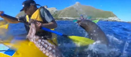 A kayaker in New Zealand was slapped in the face by a seal, with an octopus. [Image Breakthrough Videos/YouTube]