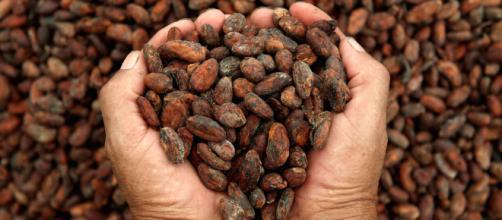 Beneficios del cacao para nuestro cuerpo   López-Dóriga Digital - lopezdoriga.com