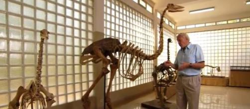 Elephant birds lived in Madagascar - Image credit - BBC Earth | YouTube