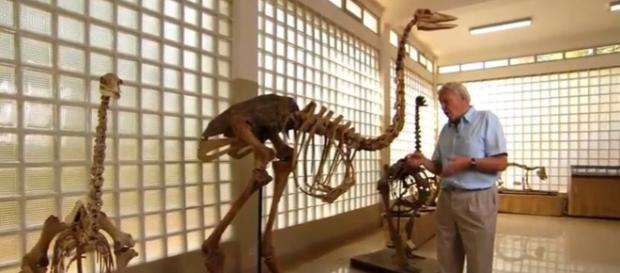 Elephant birds lived in Madagascar - Image credit - BBC Earth | YouTube