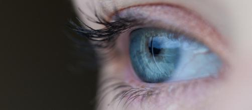 Occhi vertebrati vedono di notte