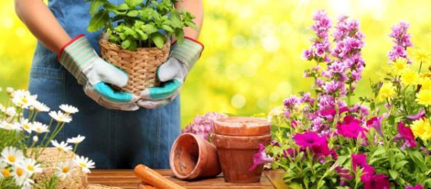 Giardinaggio di Maisto Luigi Srl Melito di Napoli - Google+ - google.com