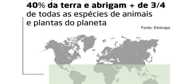 Brasil contribui significativamente na biodiversidade mundial, de acordo com cientistas